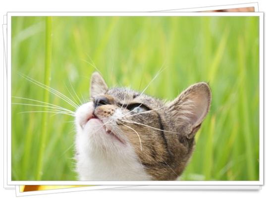 猫アレルギーの症状と本気の治し方!猫種によっては空気清浄機でも?5
