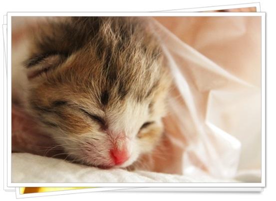 猫アレルギーの症状と本気の治し方!猫種によっては空気清浄機でも?3