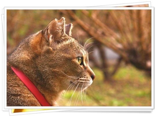 猫アレルギーの症状と本気の治し方!猫種によっては空気清浄機でも?2