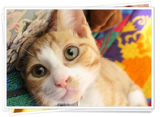 猫アレルギーの症状と本気の治し方!猫種によっては空気清浄機でも?4