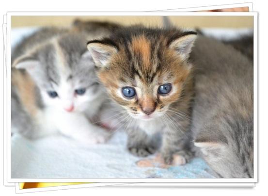 猫アレルギーの症状と本気の治し方!猫種によっては空気清浄機でも?1