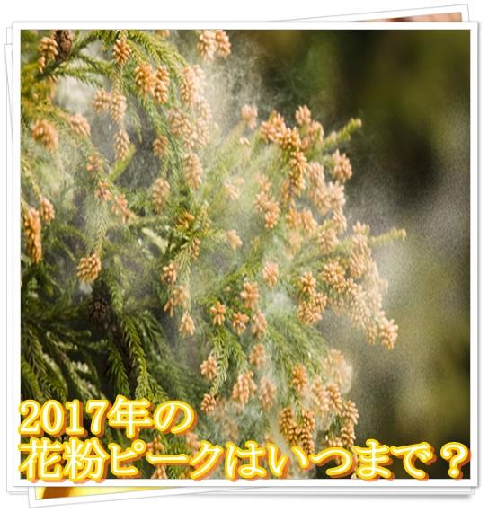 2017年の花粉情報まとめ!時期は秋?ピークはいつまでかも予想!