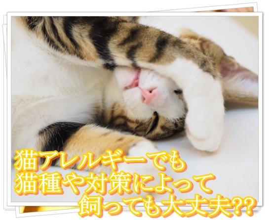 猫アレルギーの症状と本気の治し方!猫種によっては空気清浄機でも?